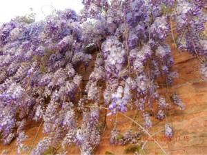 purpleflow